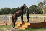 retraining retired racehorses
